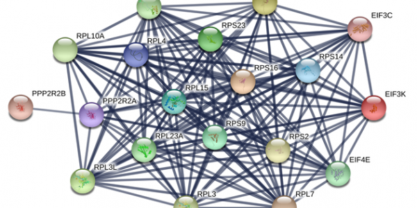 Network diagram of differentially expressed proteins in Descemet membrane